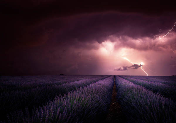 Electricity Photograph - Lavender Fragrance by Franz Schumacher