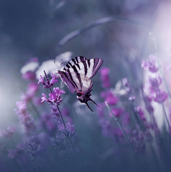 Wall Art - Photograph - Lavender Queen... by Juliana Nan