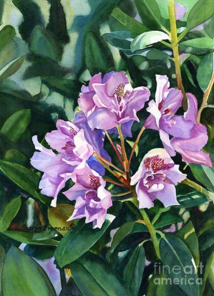 Violet Painting - Lavender Rhododendron In Sunlight by Sharon Freeman