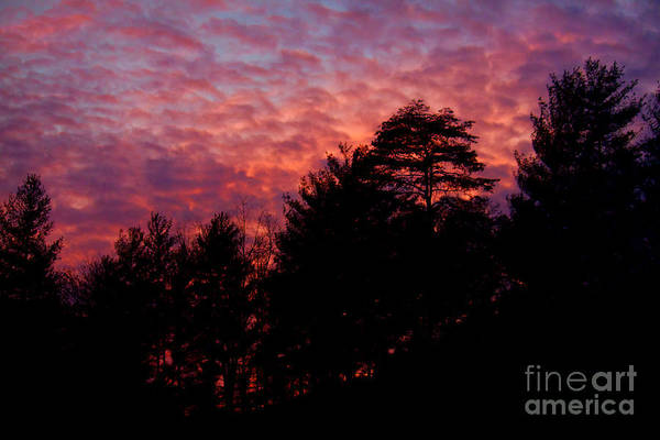 Wall Art - Photograph - Lavender Skies by Lena Auxier