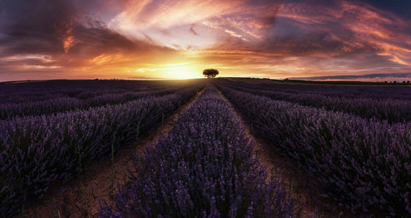 Lavender Field Wall Art - Photograph - Lavender Sunset by Jorge Ruiz Dueso