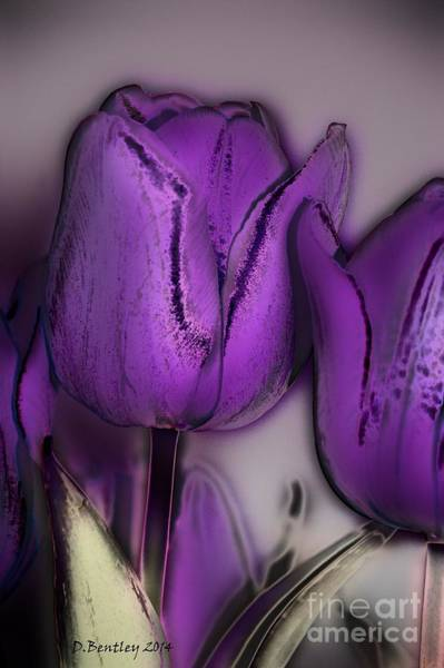 Photograph - Lavender Tulips by Donna Bentley