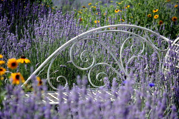 Lavender With Scrolled Settee Art Print