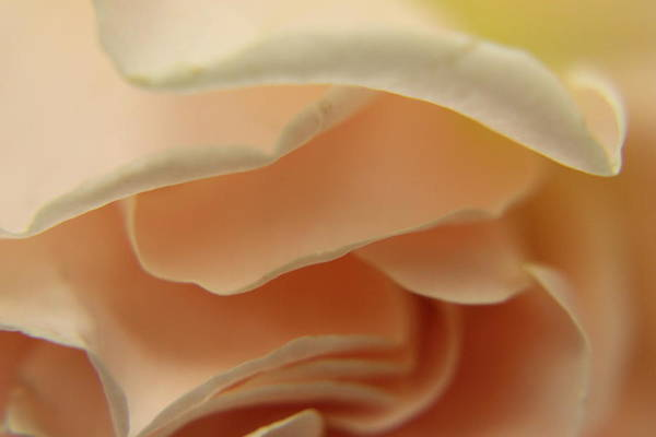 Photograph - Layers Of Love by Nancy Ingersoll