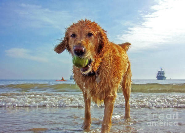 Fetch Photograph - Golden Retriever Dog With Tennis Ball At The Beach by Nishanth Gopinathan
