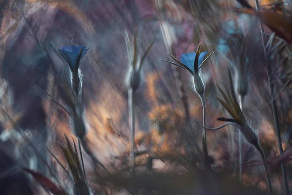 Blue Flower Photograph - Le Conseil Du Chef Indien by Fabien Bravin