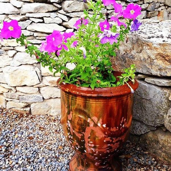 Anduze Flower Pot With Petunias Art Print