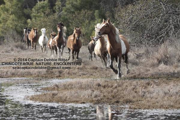 Photograph - Leader Of The Pack by Captain Debbie Ritter