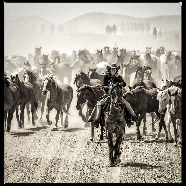 Dun Photograph - Leader Of The Pack by Joan Davis