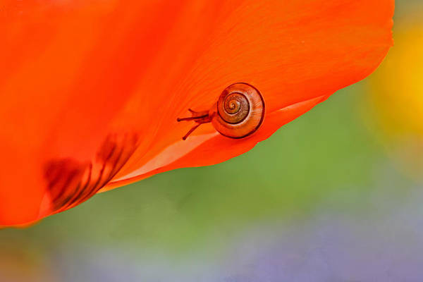 Photograph - Leading A Colorful Life by Peggy Collins