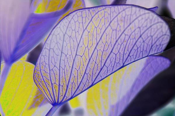 Photograph - Leaf Abstract by David Rich