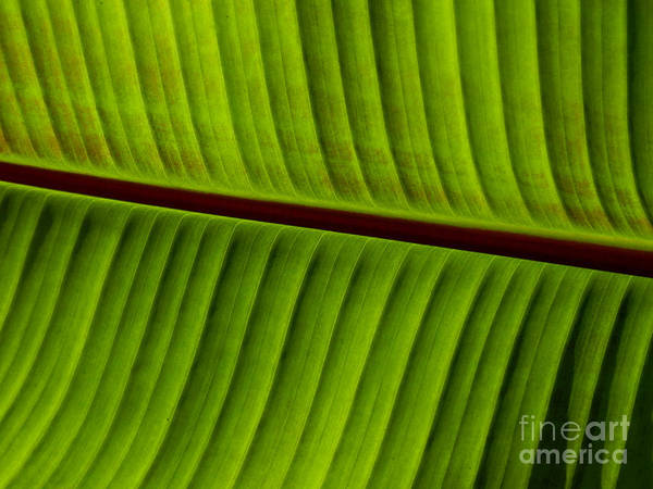 Photograph - Leaf Abstract by Grace Dillon