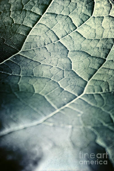 Wall Art - Photograph - Leaf Abstract by HD Connelly