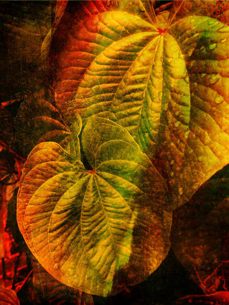 Photograph - Leaf Art  by Dave Bosse