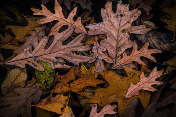 Photograph - Autumn Leaf Art Shapes And Patterns by Randall Nyhof