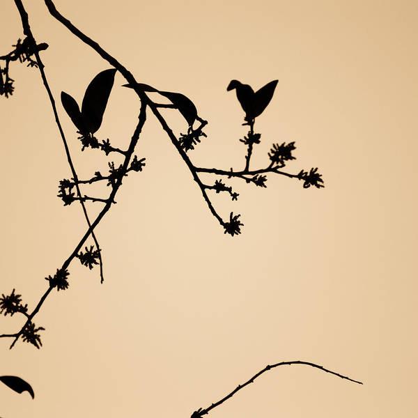 Photograph - Leaf Birds by Darryl Dalton