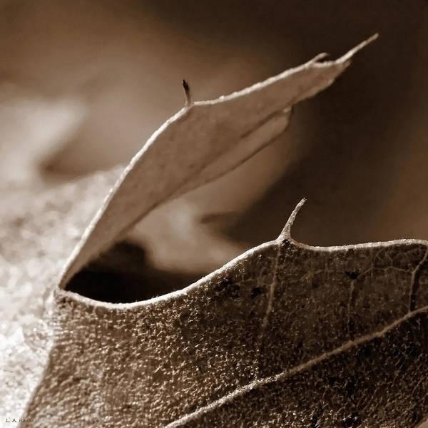 Photograph - Leaf Collage 2 by Lauren Radke