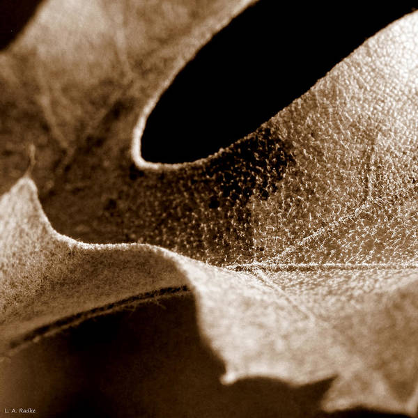 Photograph - Leaf Collage 3 by Lauren Radke