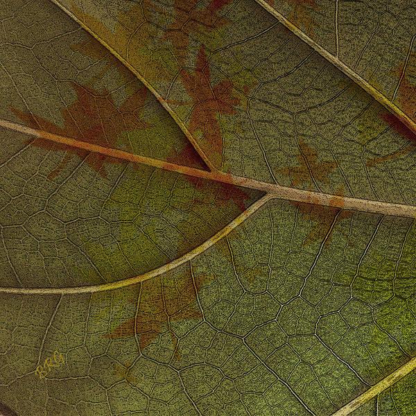 Photograph - Leaf Design I by Ben and Raisa Gertsberg