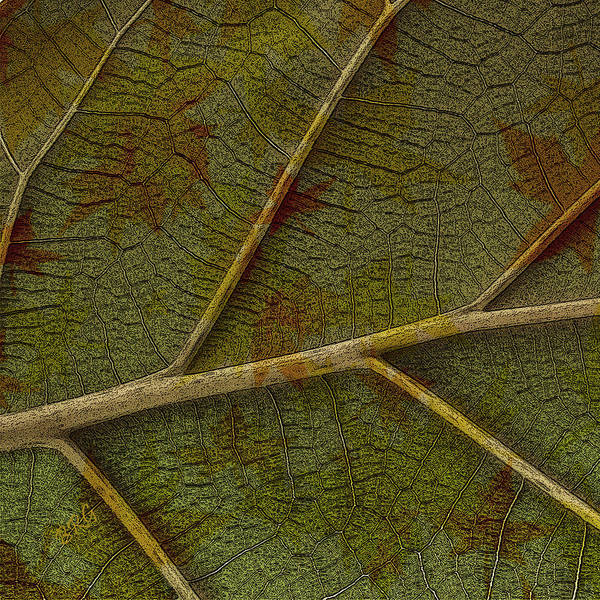 Earthtones Photograph - Leaf Design II by Ben and Raisa Gertsberg
