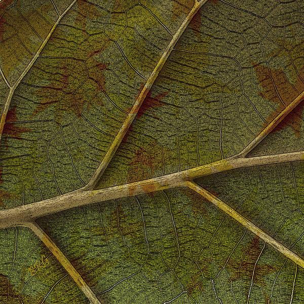 Photograph - Leaf Design II by Ben and Raisa Gertsberg
