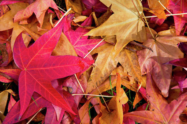 Wall Art - Photograph - Leaf Fall by Mel Foody Photography