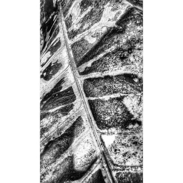 Minimalism Photograph - Leaf #flora #blackandwhite #monochrome by Sanz Lashley