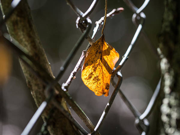 Photograph - Leaf. by Gary Gillette