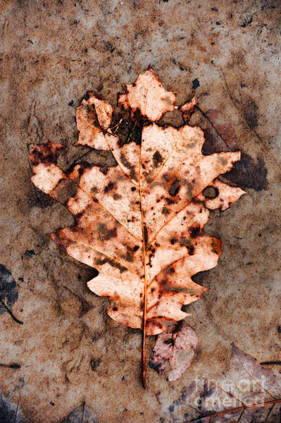 Wall Art - Photograph - Leaf by HD Connelly