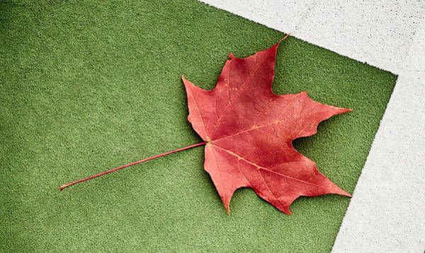Photograph - Leaf In The Corner by Gary Slawsky