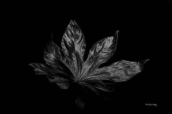 Photograph - Leaf In The Dark by Randi Grace Nilsberg
