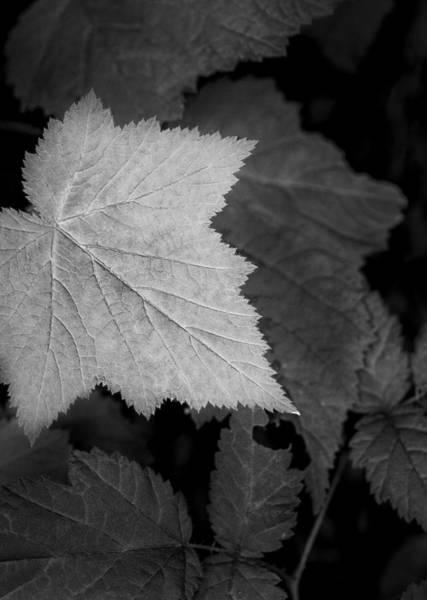 Photograph - Leaf Me Alone by Jon Glaser