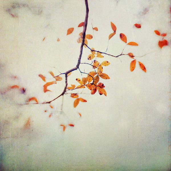Dawn Photograph - Leaf Motif by Dawn D. Hanna