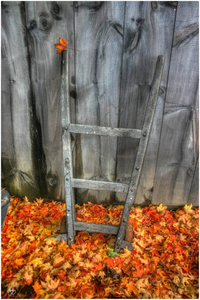 Photograph - Leaf On A Dolly by Wayne King