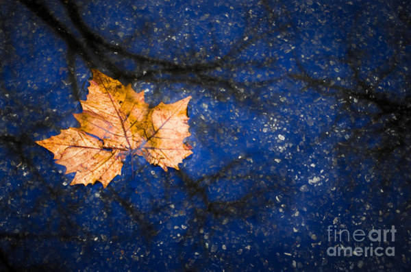 Photograph - Leaf On Water by Michael Arend