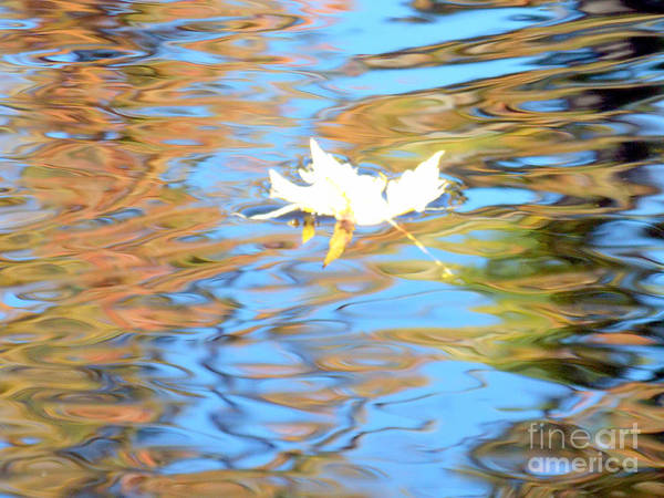 Wall Art - Photograph - Leaf On Water by Rebecca Malo