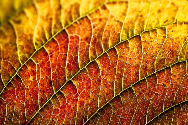 Photograph - Leaf Rainbow by Crystal Hoeveler