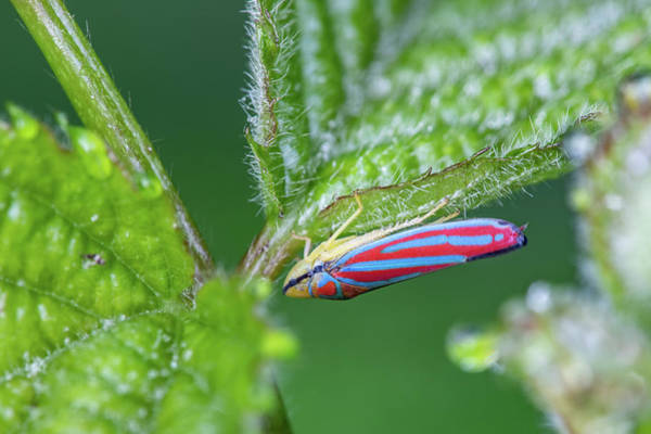Wall Art - Photograph - Leafhopper by Nature's Faces