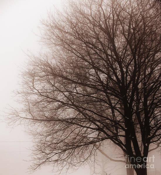 Leafless Tree Wall Art - Photograph - Leafless Tree In Fog by Elena Elisseeva