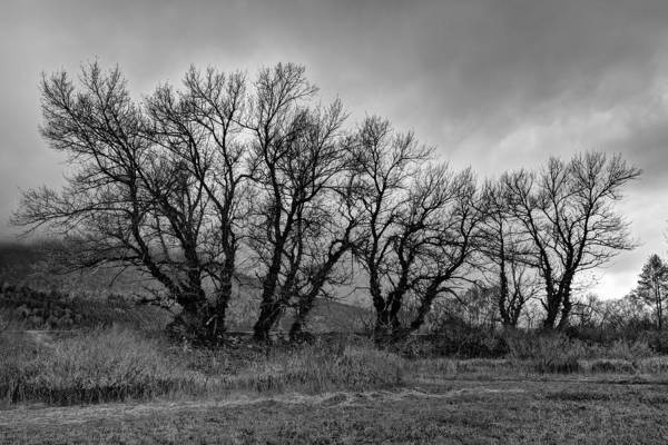 Photograph - Leafless Trees Bw by Ivan Slosar