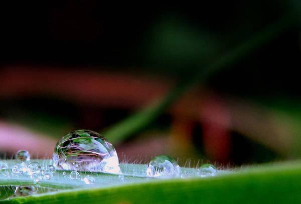Photograph - Leafy Drop by Suzy Piatt
