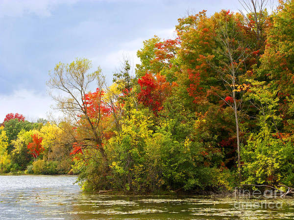 Livonia Photograph - Leaning Into Autumn by Ann Horn
