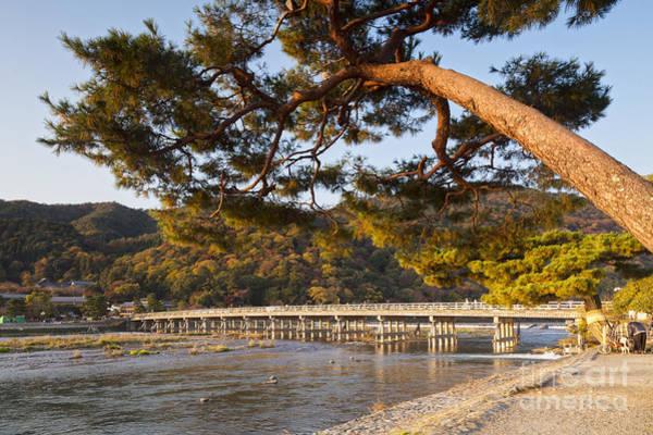 Wall Art - Photograph - Leaning Pine Tree Arashiyama Kyoto Japan by Colin and Linda McKie
