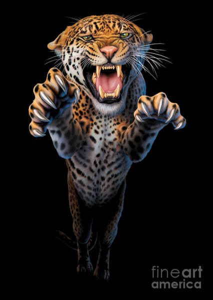 Jumping Photograph - Leaping Leopard by MGL Meiklejohn Graphics Licensing