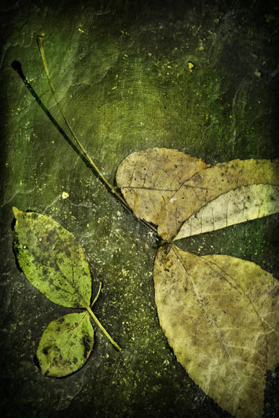Dark Olive Green Wall Art - Photograph - Leaves Afloat by Melissa Smith