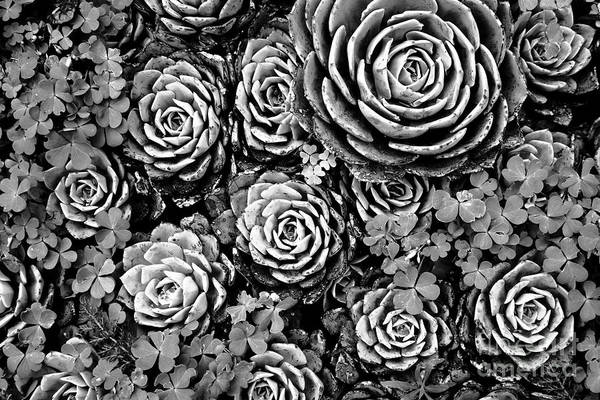 Succulent Photograph - Leaves And Succulents by James Brunker