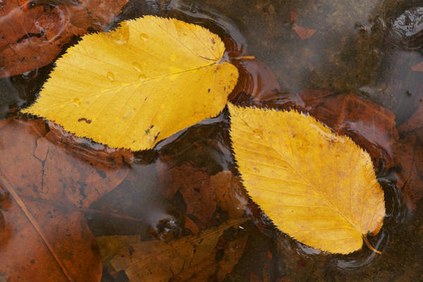 Lula Wall Art - Photograph - Leaves And Water by Byron Jorjorian