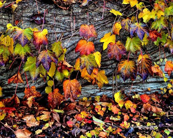 Photograph - Leaves At The Levee by Susie Loechler