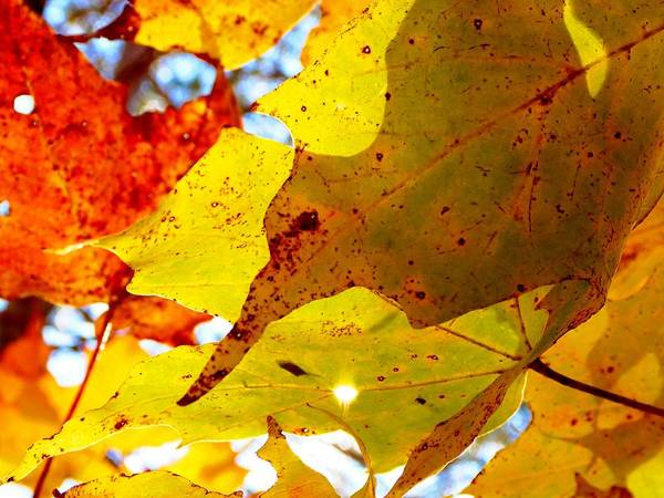 Photograph - Autumn Leaves by Cristina Stefan