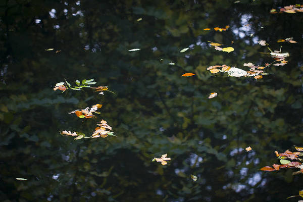 Photograph - Leaves Floating On The Reflection. by Clare Bambers